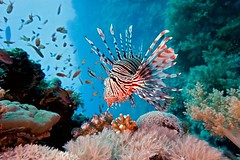 8ab759878f17ffeaeccc6a6ea6050b9e--great-barrier-reef-coral-reefs