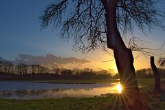 MS Rieselfelder 20180212 (Dirk Buse) Tags: münster nordrheinwestfalen deutschland deu rieselfelder sonnenuntergang kontrast sonne natur nature outdoor sigma dc dn mft m43 olympus nrw germany