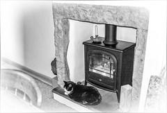 Keeping Warm . (wayman2011) Tags: lightroomfujifilmx100 wayman2011 bw mono cats fireplaces home houses pennines dales teesdale stainton countydurham uk