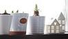 Growing Nicely (haberlea) Tags: home window pots plants display growing white