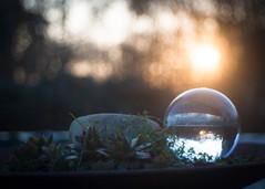 ...as Sun goes down (ursulamller900) Tags: glassbowl trioplan2950 sunset sonnenuntergang mygarden fotokugel glaskugel hss