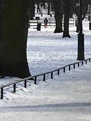 Ett litet staket. #FS180225 #staket #fotosondag (ulricalyhnakis) Tags: fs180225 staket fotosondag