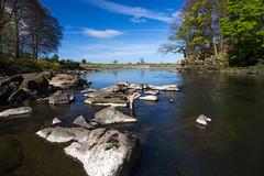 River Ribble at Dinckley - Marles Wood
