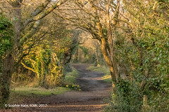Golden Hill Woodland Paths (SLHPhotography1990) Tags: 2018 freshwater january nature reserve walk woodland woods path shade dusk winter golden hill