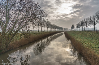 Trees and reflection...