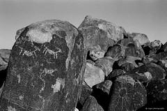 Signal Hill (dpsager) Tags: arizona bw blackwhite cactus dpsagerphotograph eos1v film kodak nationalpark petroglyph saguaro saguaronationalpark signalhill trix400 tucson