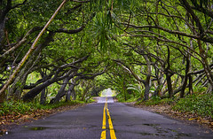 Rainforest Road Big Island Hawaii (swissukue) Tags: rainforest bigislandhawaii jungle road trees usa sonya9 innamoramento