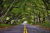 Rainforest Road Big Island Hawaii (swissukue) Tags: rainforest bigislandhawaii jungle road trees usa sonya9 innamoramento