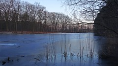 Frozen (Daphne-8) Tags: lake lago lac meer see vijver pond frozen ice eis glace ijs bevroren koud froid cold kalt winter hiver inverno invierno morning dawn morgen dämmerung ochtend schemer natuur nature