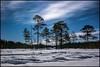 Ludi träsk (Jonas Thomén) Tags: ludi träsk march wetland snow snö winter vinter trees träd moonlight månljus skog forest natt night clouds molncold kallt