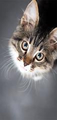 Papier-peint pour porte Charming Kitten (emmanuel_delahaye) Tags: papier mobilier deco artgeist recollection decointerior interiordesign design home décoration papierspein