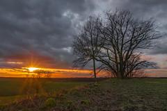 sunset on a hill (ralfkai41) Tags: sun sunset wolken baum landschaft landscape sonne himmel nature sky outdoor tree sonnenuntergang natur clouds