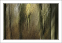 The Twist. (muddlemaker1967) Tags: hampshire landscape photography stoke park woods abstract woodland nikon d700 nikkor 200500mm f56 light leaves trees icm