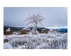 #davidramalleira (david Ramalleira) Tags: winter snow tree davidramalleira landscape davidramalleiraphotography d700 nikon landscapes nature naturaleza natureart naturephotography naturesfinest naturesart natura nieve