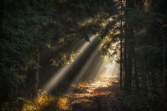 Further Into The Woods - 20/365 (der_peste) Tags: raysoflight raysofgod godrays sunrays sunbeams forest path woods woodland forestpath shadow light autumn winter colors moody mood fog foggy crepuscularrays