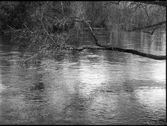 overhanging branches, reflections, French Broad River, Asheville, NC, Mamiya 645 PRO, Mamiya sekor 80mm f-2.8, Rollei Retro 400S, Moersch Eco Film Developer, mid February 2018 (steve aimone) Tags: branches overhanging river reflections frenchbroadriver westasheville asheville northcarolina mamiya645pro mamiyasekor80mmf28 mamiyaprime prime primelens 120 film 120film mediumformat monochrome monochromatic blackandwhite rolleiretro400s moerschecofilmdeveloper