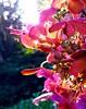 IMG_2049 (Die kleine Meerjungfrau) Tags: golden gold gelb yellow orange alt old neu new iphone diekleinemeerjungfrau lights light licht sunshine sonnenschein sonnenlicht sonne sunlight sun backlighting gegenlicht grün green weiss white rosé rosa pink parc park natur nature blütenstrauch blumenstrauch strauch pflanzen pflanze plants plant blossoms blossom blütenblätter blütenblatt blüten blüte blumen blume flowers flower