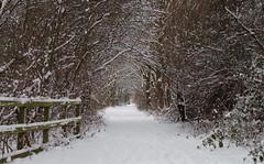 sheffield snow -beast from the east - 2018 (11) (Simon Dell Photography) Tags: sheffield snow beast from east beastfromtheeast 2018 winter blizzard weather photos hackenthorpe s12 shirebrook valley simon dell photography nature wildlife birds woodland tree tunnel forest country side landscape wonderland spring febuary