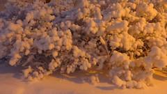 IMG_4355 (Mr Thinktank) Tags: raureif frost