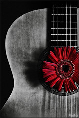 6 string Carmen (pavelfadeevv) Tags: 6 string carmen photo photography portrait character people studio mood girl bw still art color monochrome blackandwhite blackandwhitephotography stilllife beautiful beauty wooden vintage background light brutal drink food fruit berries glass cup flowers plants nature coffee morning