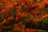 Remembering Autumn, waiting for Spring (Monica Muzzioli) Tags: autumn textures red yellow orange green colorful colors colours colored trees nature