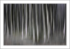 Woodland Apparitions (muddlemaker1967) Tags: hampshire landscape photography micheldever woods beech trees icm multiple exposure woodland winter 2018 fuji xpro1 nikkor 105mm f25 ais lens
