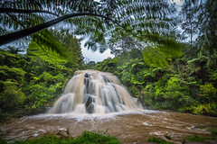 Owharoa Falls (Daniel.Peter) Tags: nz neuseeland newzealand owharoafalls dpe3x waterfall wasserfall farn fern owaharoa