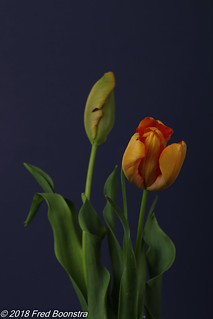 More Spring in the livingroom,