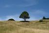 Maestra (Bradipossum) Tags: xt2 fuji albero pace natura