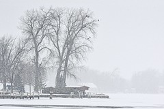 Waiting Out The Storm:  Bald Eagles (J Henry G) Tags: eagles winneconne wisconsin snowstorm wolfriver johnhenrygremmer