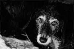 Oggi vi presento Ludo e Nocciolina (andaradagio) Tags: andaradagio bianconero bw canon dog cane miglioramicodelluomo nadiadagaro rifugioohana bandaa4zampeumbria