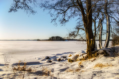 Looks like February (Joni Mansikka) Tags: nature winter outdoor sea snowy shore ice trees bright light sky landscape sauvo suomi finland snow atx280afpro tokinaaf2880mmf28
