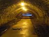 Túnel (Daquella manera) Tags: washington dc deer tunel tunnel ciervo sl001440dc