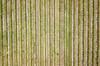Vineyard (Scottmh) Tags: aerial dji grid lilydale lines mavic patterns pro vines vineyard texture fav10 fav20 fav30 fav40 fav50