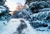 Snowy Walk (domwlive) Tags: edinburgh gardens paths scotland snow trees winter unitedkingdom gb