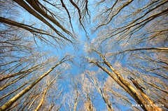 Reaching Higher (mswan777) Tags: outdoor nature up winter michigan hike trail scenic nikon d5100 sigma 1020mm warren woods park tall pattern