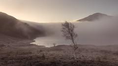 Clearing (jellyfire) Tags: bendamph distagont3518 elgol february highlands landscape landscapephotography lochclair scotland sony sonya7r sunrise torridon winter ze zeissdistagont18mmf35ze fog leeacaster mist tree wwwleeacastercom zeiss