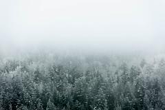 Forêt engloutie par le brouillard givrant (Samuel Raison) Tags: hautsplateauxduvercors vercors brouillard forêt hiver winter nikon nikond3 nikon4200400mmafsgvr autaut
