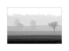 Brume matinale... (Laurent TIERNY) Tags: campagne bw countryside