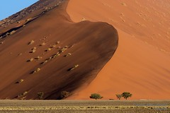 Monster dune (marcomariamarcolini) Tags: marcomariamarcolini nikond800 nikkor nikkor70200f4vr sabbia sand dune duna rosso blu red blue redsanddune namibia sossusvlei climbing tree people vacation journey perfectshape perfection bigformat wow