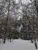 Snowy Trees and Hudson (Pyrolytic Carbon) Tags: trees snow mobile hudson hudsonbrunton labrador chocolatelabrador