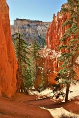 Peek-a-Boo loop, Bryce Canyon - Utah (hervétherry) Tags: etatsunis unitedstates usa utah canon eos 300d efs 1855 brycecanyon bryce canyon peekaboo loop trail navajo hoodoo