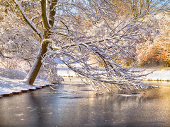 _B308576 Swing Low (Explore) (Charles Bonham) Tags: dowgardens midlandmi trees winter snow pond water olympus charlesbonhamphotography