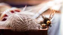 The art of fly tying - Macro Mondays (griffin.s.scott) Tags: hackle soft mottled flyfishing flytying fly feather partridge macromondays speckled