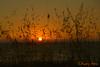 Coucher de soleil sur l'océan (Audrey Abbès Photography ॐ) Tags: coucherdesoleil océan portduplomb france charentemaritime nouvelleaquitaine audreyabbès couleur orange herbe paysage landscape sunset sky ciel soleil été nikon d600 sundaylights