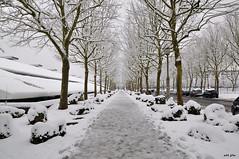 Winter way (petit_filou77) Tags: winter snow ice trees arbres neige rue street marne glace verglas nikon d90