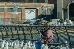 """The Bird Lady of Asbury Park"" (Photography by Sharon Farrell) Tags: asbury asburypark asburyparknj asburyparknewjersey newjersey jerseyshore seagulls seagull asburyparkpress birdlady birdladyofasburypark monmouthcountynj monmouthcountynewjersey seaside downtheshore attheshore"