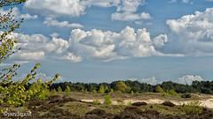 Wekeromse Zand (jandewit2) Tags: wekeromse zand nederland netherlands landscape landschap veluwe gelderland