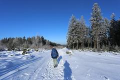 IMG_0234 (rudolf.brinkmoeller) Tags: eifel wandern natur eifelsteig hohesvenn