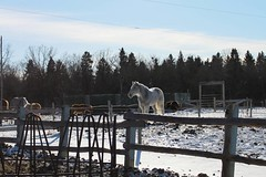 (Hayley KC) Tags: horse stables ranch horses whitehorse winterscene